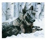 Bella - Black Wolf