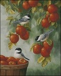 Apple Harvest Chickadees