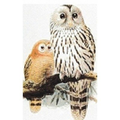 "Chouette de l""Oural son Petit  (Mother and Baby Owl)"