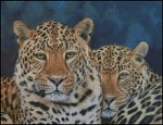 2 Leopards