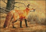 Autumn Fire Red Fox